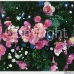 flowers_15