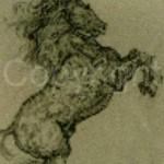horses_06