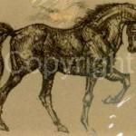 horses_12